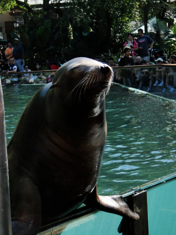 Friendly Sea Lion at Central Park Zoo New York City