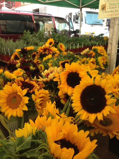 Sunflowers at Union Square Farmers Market NYC