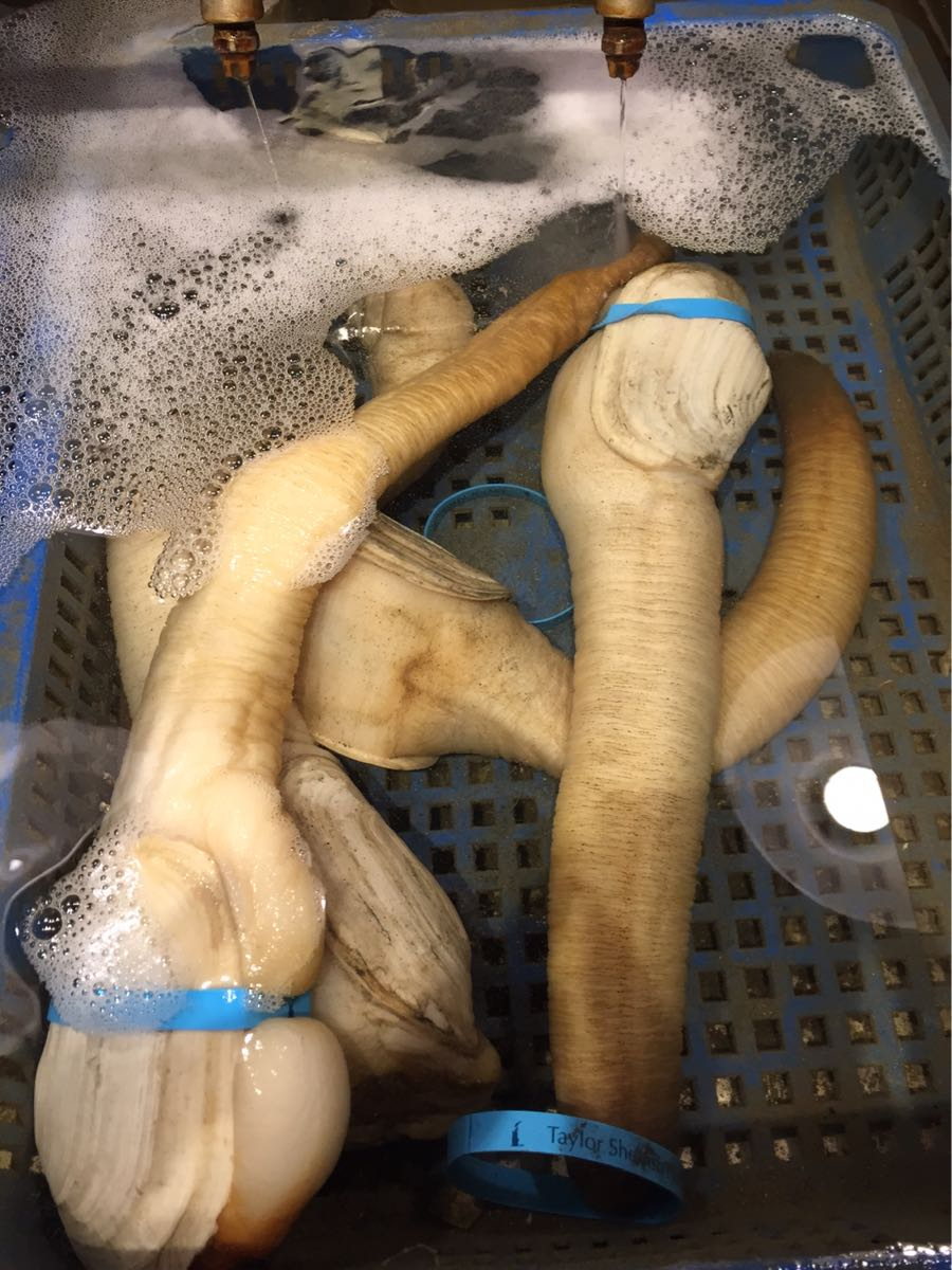 Geoduck at Taylor Shellfish in Capitol Hill, Seattle